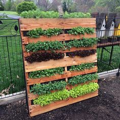 Preparing for a class on vertical gardens. Kinda expected this to be a Pinterest fail, but it turned out great! 🌿#palletproject #saladpallet #verticalgarden