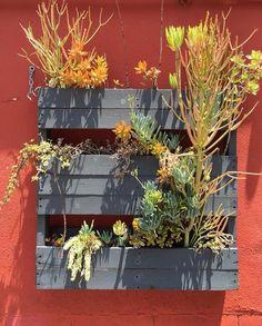 Vertical pallet garden--