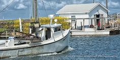 The Jennifer Sue Tangier Island, Virginia Water Pictures, Water Pics, Delmarva Peninsula, Lobster Fishing, Bay Boats, Virginia Usa, Virginia Is For Lovers, Boat Painting, Tangier