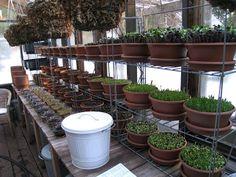 Christina's Garden: January 2012