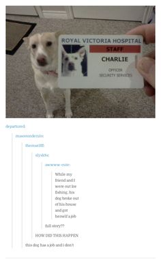 31 Times Tumblr Was The Most Relatable Place On The Internet.  This is actually really funny.