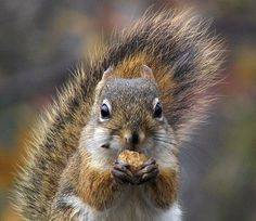 #Squirrel