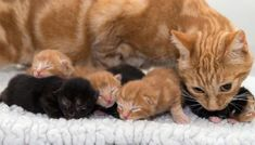 Ginger Cat Mama Came to the Shelter with a Big Belly, Then One Day...