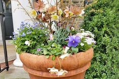 A large round terra cotta flower pot filled with pansies, hellebores, forsythia, and other types of flowers and foliage, in front of a stone house. Shade Perennials, Flowers Perennials, Clover Lawn, Winter Pansies, Ivy Geraniums, Lenten Rose, Terracotta Flower Pots, Propagating Succulents, Types Of Flowers