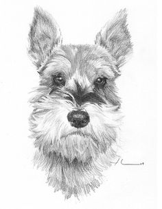 """Explore our internet site for more details on """"schnauzer puppies"""". It is actually an excellent spot to find out more. Explore our internet site for more details on schnauzer puppies. It is actually an excellent spot to find out more. Schnauzer Mix, Miniature Schnauzer, Standard Schnauzer, Outline Drawings, Animal Drawings, Art Drawings, Puppy Drawings, Guache, Illustrations"""