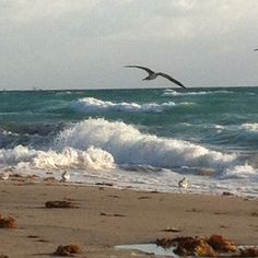 Hollywood Beach, Florida   would like to be there