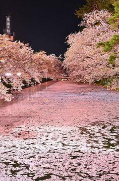 japan cherry blossom festival