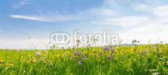 Flower field in springtime