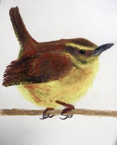 Carolina Wren - Oil Pastel by EmmieBeeCreations on deviantART. I haven't posted on here in ages. How are all you doing?! I ended up really liking this picture. Oil pastels have been my best friend and mortal enemy. ;) I didn't think I could capture the feathery wisps, until I snatched up a dried pen and began dragging it around. MUCH better than I expected. I hate the tail and the wing, but oh well. :D