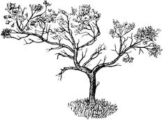 Juniper Tree - represents a very long journey, and the desire to maintain your individuality