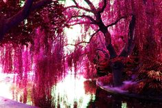 The Color Pink Wallpaper 14710 HD Wallpapers Desktop - Res ...
