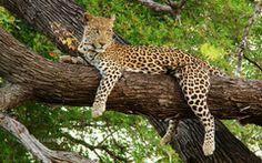 Tiere im Zoo (Quizlet) http://quizlet.com/43201165/tiere-im-zoo-de-eng-flash-cards/