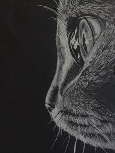 Close up of a cat in white charcoal on black paper