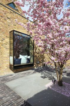 West London Garden with Cherry Blossom Cherry Blossom Tree, Blossom Trees, Cherry Tree, Blossom Garden, House Extension Design, London Garden, Potted Trees, Interior Garden, Arquitetura