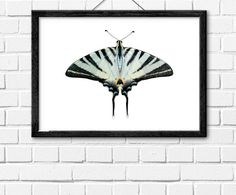 Butterfly PrintInstant DownloadPrintable by InstantGalleryWall