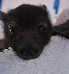 Baby Bats Are Adorable, Click the link to view today's funniest pictures!