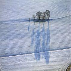 Breathtaking Blue Shadows of Barren Winter Trees by photographer Klaus Leidorf - via My Modern Metropolis