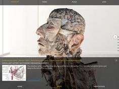 Human Anatomy, Augmented Reality, Mobile App, Improve Yourself, Ios, Layers, Lion Sculpture, Android, Medical