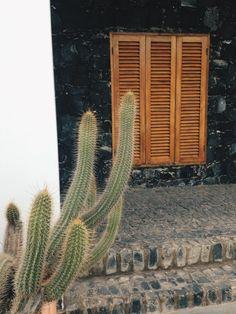 #cactus #colors #capeverde