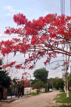 Chivato en una calle. Asunción-Paraguay
