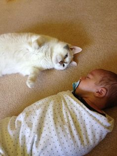 And when this dude was the best babysitter ever. | 31 Times Cats Made The World A Better Place