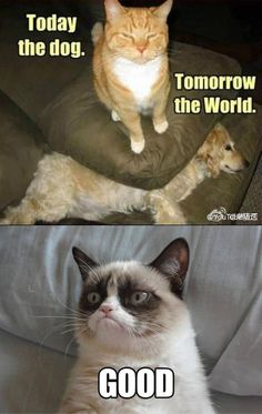 Grumpy Cat is just so wonderful. - - Grumpy Cat is just . Grumpy Cat is ju Gato Grumpy, Grumpy Cat Good, Grumpy Cat Quotes, Funny Grumpy Cat Memes, Funny Animal Jokes, Cat Jokes, Cute Funny Animals, Funny Animal Pictures, Funny Cats