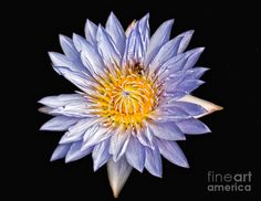 White Water Lilly Photograph by Nick Zelinsky