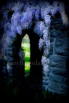 Amy Ragsdale Photo: Wisteria Gate... looking forward to this springs version...