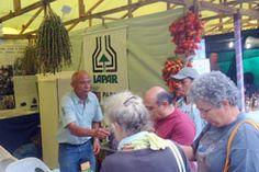 Iapar participa da 32ª Feira Agrícola e Artesanal de Morretes