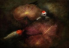 Animal - Fish - I Will Grant Your Wishes Three Photograph  - Animal - Fish - I Will Grant Your Wishes Three Fine Art Print. Mike Savad