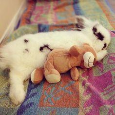 Bunny Naps with a Stuffed Friend - January 3, 2012