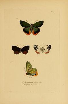 Souvenirs d'un voyage dans l'Inde exécuté de 1834 à 1839, - Biodiversity Heritage Library