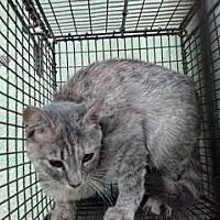 Saving Shelter Pets Inland Empire In San Bernardino California In 2020 Kitten Adoption Pets Cat Breeder