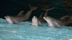 SET THE INDY ZOO DOLPHINS FREE!! Please SIGN & REPIN Petition!  ....   http://www.change.org/en-GB/petitions/set-the-indy-zoo-dolphins-free?recruiter=462204&utm_campaign=twitter_link_action_box&utm_medium=twitter&utm_source=share_petition