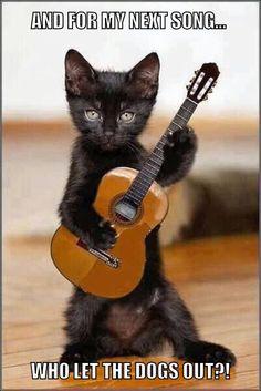 _ga- I really love the tiny guitar for the tiny kitten Elvis Catnip.