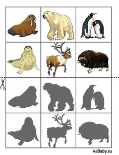 Polar Animals, Arctic, Art For Kids, Lion Sculpture, Statue, Winter, Montessori, Homeschooling, Woodland Forest