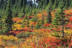 Where to See Gorgeous Fall Foliage in Washington State
