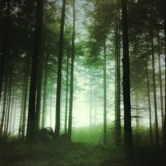 11 Secrets To Shooting Magical iPhone Photos In Mist & Fog