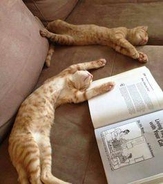 According to this photo, reading kills orange cats.
