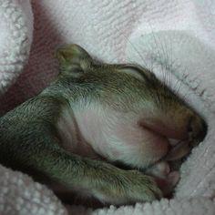 Baby squirrel snug as a bug.