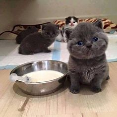 Who will feed me? ~ teeny kittens *squee* that face!