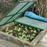 Zahradníkův kalendář na celý rok: kdy sít a sázet zeleninu, květiny, dřeviny? - Užitková zahrada Outdoor Furniture, Outdoor Decor, Plants, Home Decor, Gardens, Flower Tower, Planting Seeds, Advice, Gladioli