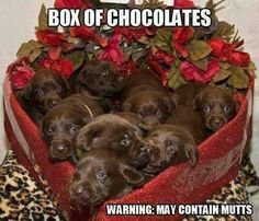 I want this for valentines day!