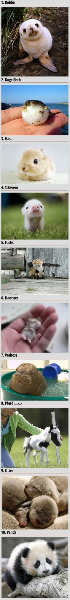 Die süßesten Tierbabys der Welt