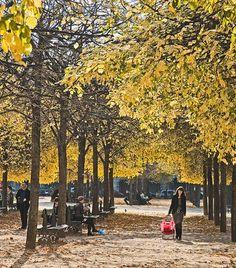 Pictures of Autumn in Paris