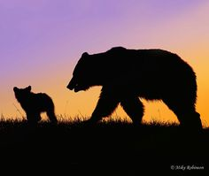 """""""Those who have packed far up into grizzly country know that the presence of even one grizzly on the land elevates the mountains, deepens the canyons, chills the winds, brightens the stars, darkens. Silhouette Painting, Animal Silhouette, Moose Silhouette, Bear Paintings, Silhouette Photography, Bear Art, Nature Photography, Photography Backdrops, Photography Tattoos"""