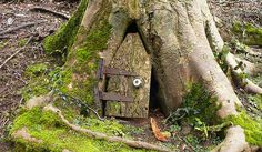 RUSTIC  FAIRY DOOR IN A TREE