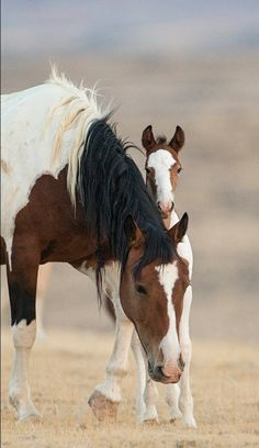 Beautiful Horse And Colt!!!