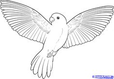 Bird Coloring Pages | How to Draw a Flying Bird, How to Draw a Bird