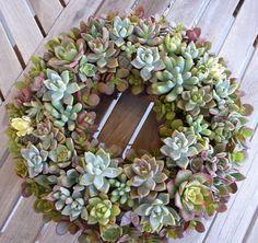 succulents | Artwork with Succulents
